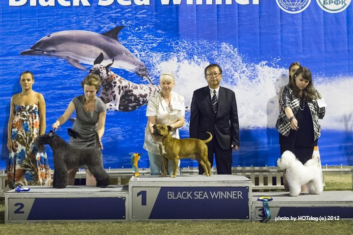Black Sea Winner-2012